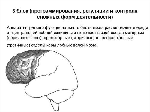 Третий функциональный блок мозга