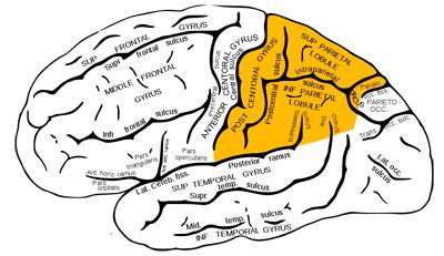 синдромы поражения теменных отделов головного мозга